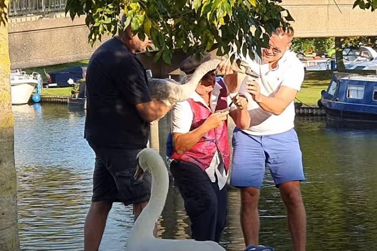 白鳥のくちばしに巻きついていた釣り糸とフックを除去!心優しい人たちに白鳥も感謝!?