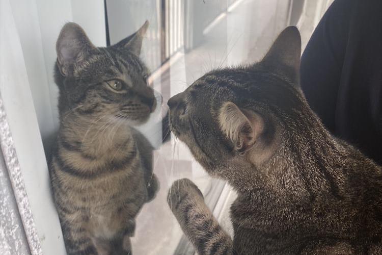 お隣に引っ越してきた激似な猫。顔をのぞきこんだ後のリアクションが面白すぎる(笑)