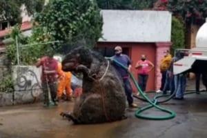 これホント?!メキシコの下水で発見されたのは・・・目を疑う巨大なネズミ?!?!