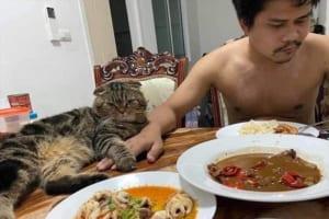 「猫に夫を盗まれた!」と訴える妻の投稿写真が面白いと世界中で話題に!