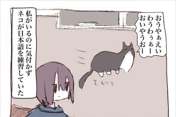 猫は意外とあなどれない!?猫が日本語を練習していた時の話が面白い(笑)