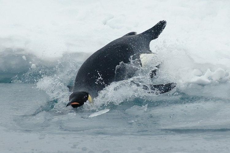【ペンギンの雑学】トボガンというペンギンの習性って知ってる?その他ペンギンにまつわる豆知識をご紹介!