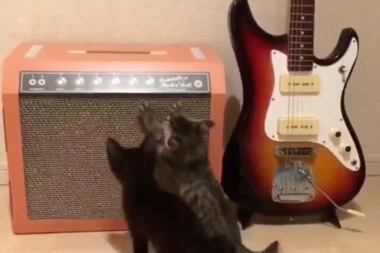 ニャンコと音楽を愛する方必見!話題を呼んだギターアンプ型「爪とぎ」の第2弾が登場です!