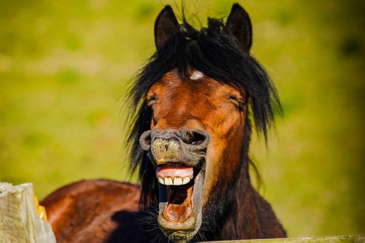 動物たちの面白ショットが集結!「コメディペットフォトアワード」のファイナリストに笑っちゃう!