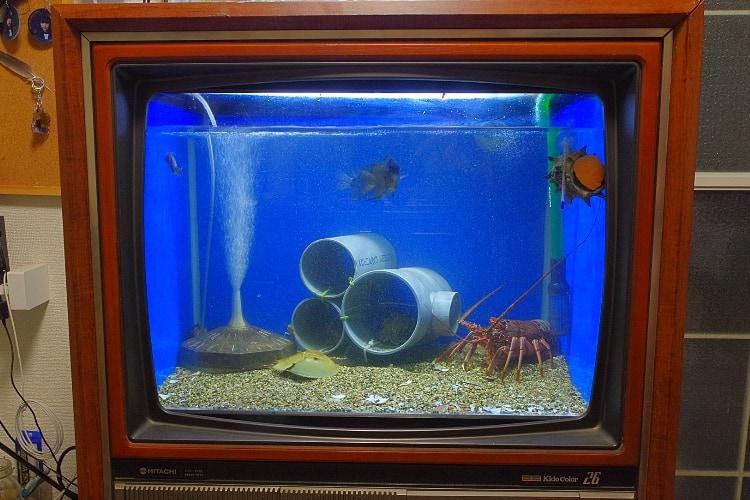 これはアイディアの天才!映らなくなったブラウン管テレビを水槽にDIYして24時間生放送に