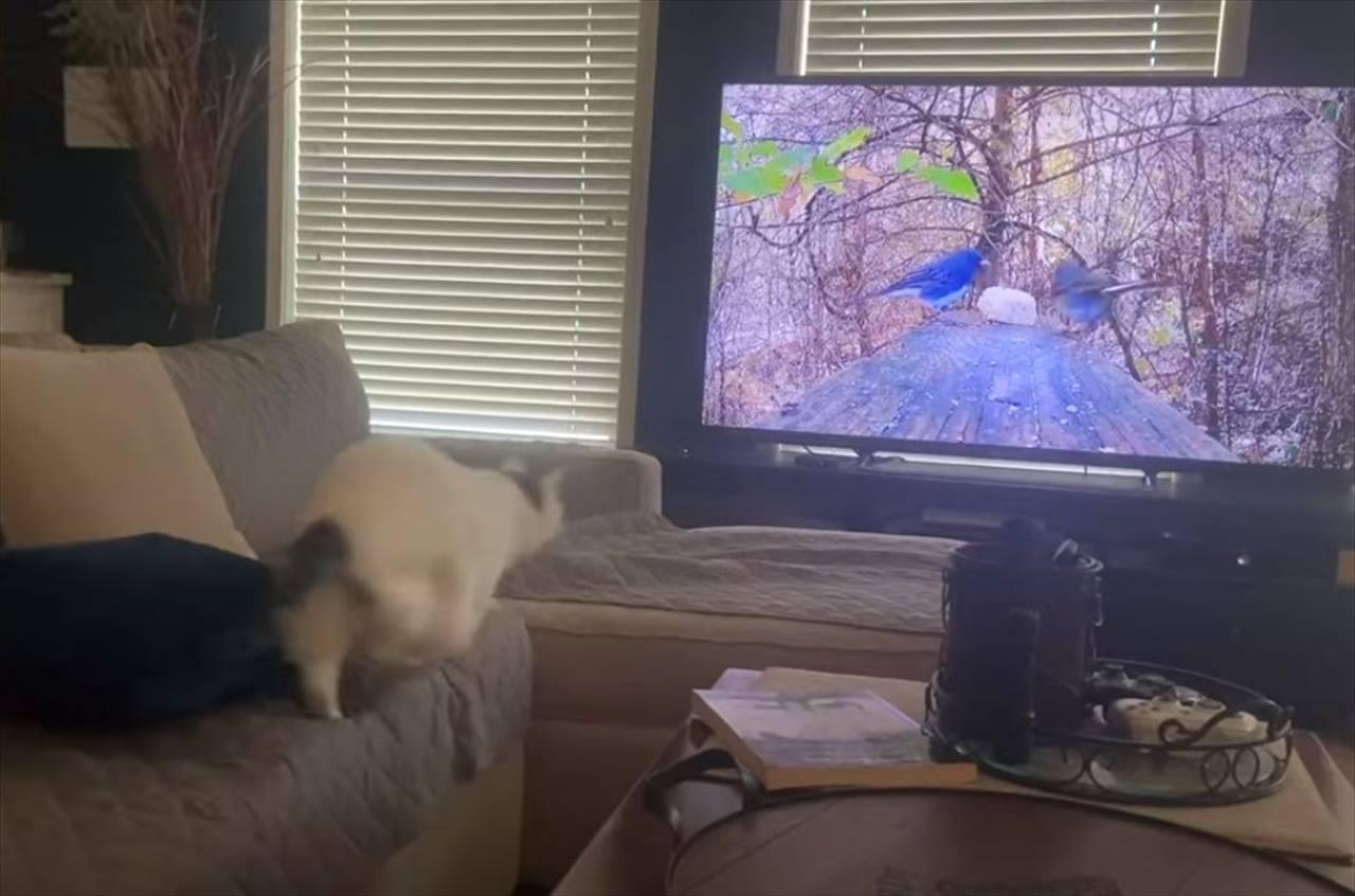 テレビに映っている鳥を捕まえようとした!?ニャンコが見せた驚きの行動に爆笑(笑)
