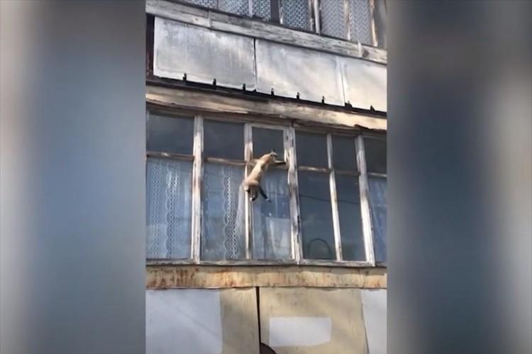 窓を這うように移動する姿はまさにスパイダーマン(笑) ニャンコの身体能力はやはり凄かった!