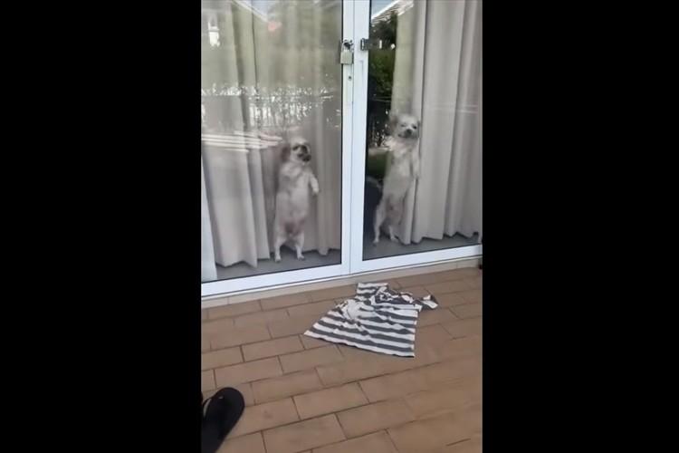 こんなに喜んでくれるんだ(笑) 飼い主の帰宅を熱烈に歓迎するワンコたちが可愛いすぎる!