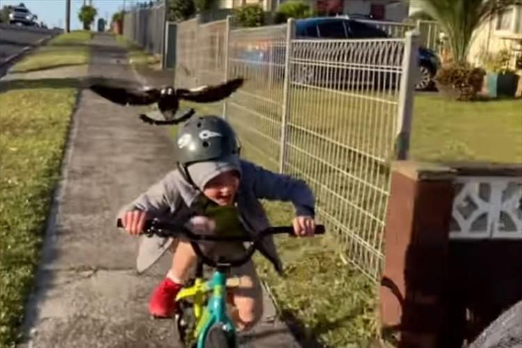 鳥に襲われる少年・・・その後どこかへ飛んで行ったかと思いきや、さらなる恐怖に直面!