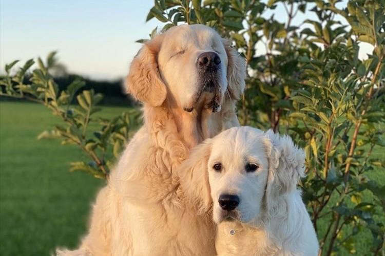 両目が見えない犬を献身的に支える親友の子犬。心温まる深い絆が話題に!