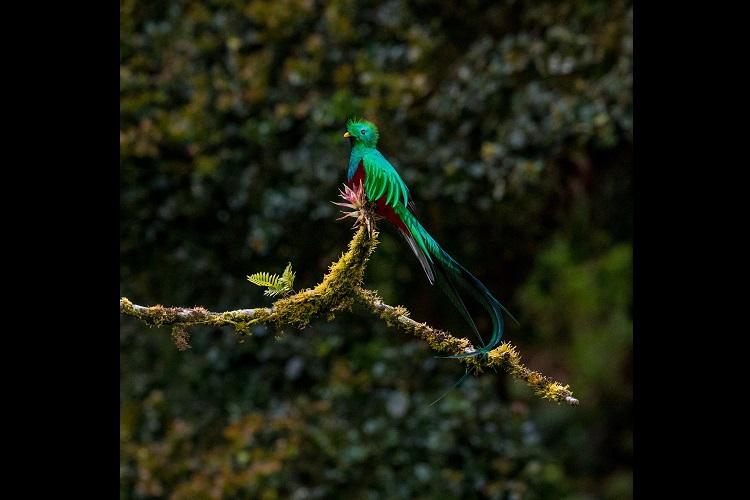 「ケツァール」、それはアステカで神の使いとされた緑色の美しい鳥