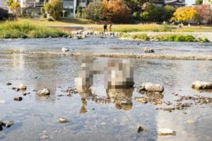 """このバランス感覚はヤバい!京都の鴨川で""""すごい人""""がいた痕跡が目撃され話題に"""