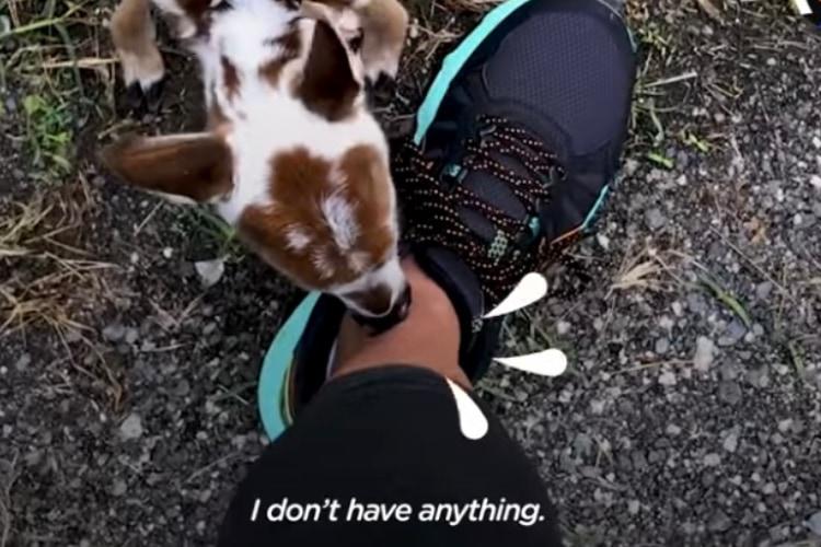 「僕、お腹空いたよ‥」森で生後まもない小鹿が女性に助けを求めて保護された時の動画が話題に