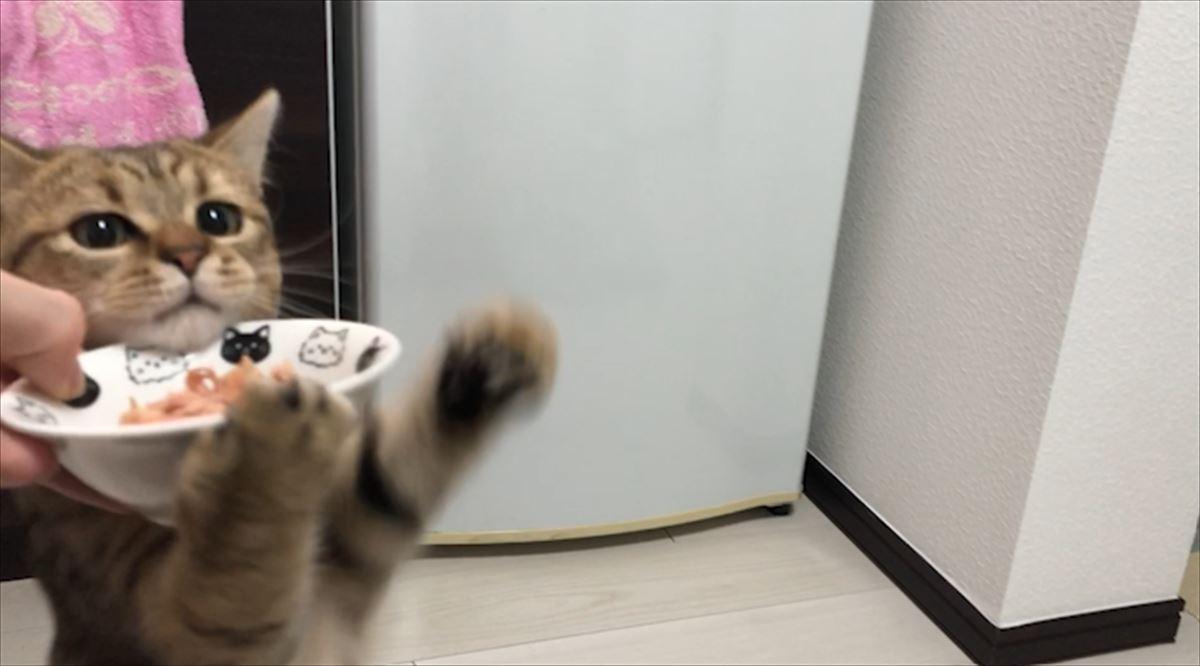 初めて猫缶を食べた子猫の反応がカワイ過ぎると話題に!子猫の猫缶初体験♪