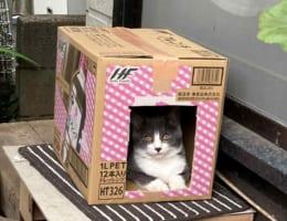 家政婦は見た!?段ボールハウスにいる猫を撮影した写真を見直してみると、後ろに・・・