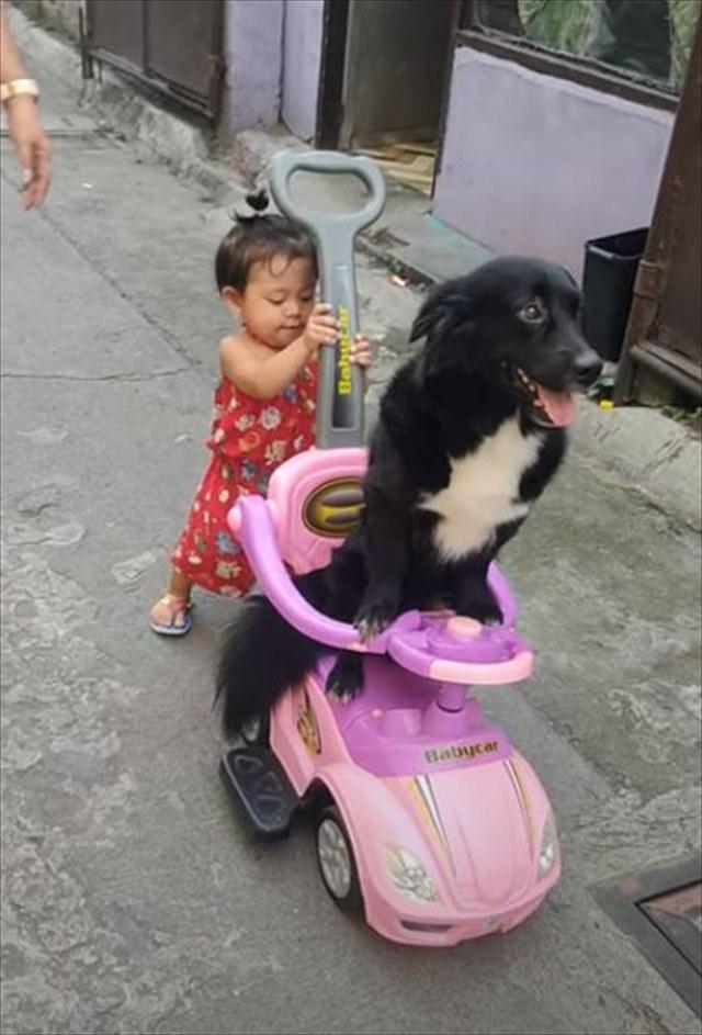 可愛いの最強コンビにほっこり(笑) 1歳の女の子がワンコをオモチャの車に乗せてお散歩