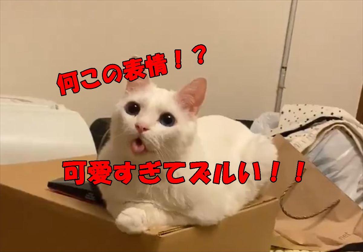 可愛すぎる表情で飼い主を癒す猫が話題に♪癒されたいときはこちらをご覧ください!
