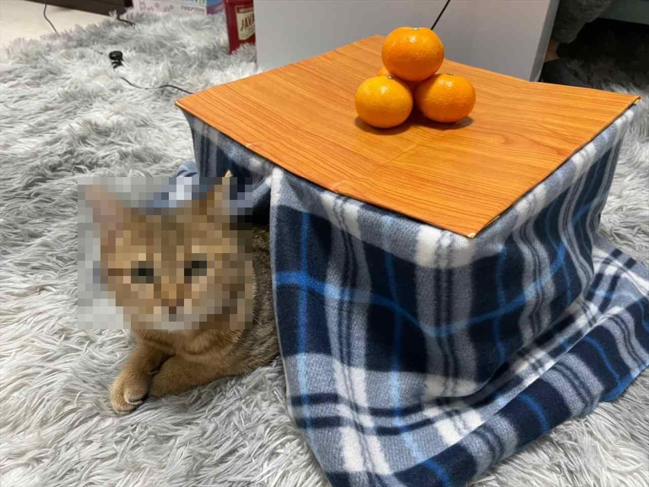 気に入ってずーっと中に入ってぬくぬくしとる…猫専用のコタツに入る愛猫が可愛すぎる!