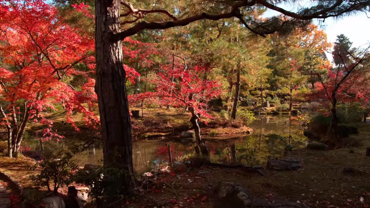 紅葉狩りに行けない人もこれを見れば大丈夫!京都の紅葉をまとめた動画で行った気になれる!