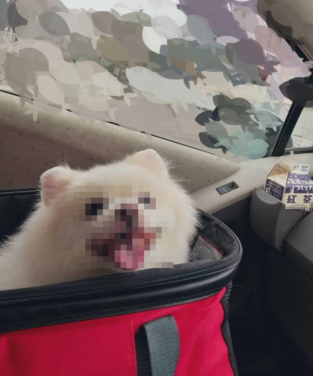 動物病院に連れていかれると思って震えていたワンコが、とびっきりの笑顔を見せた理由とは!?