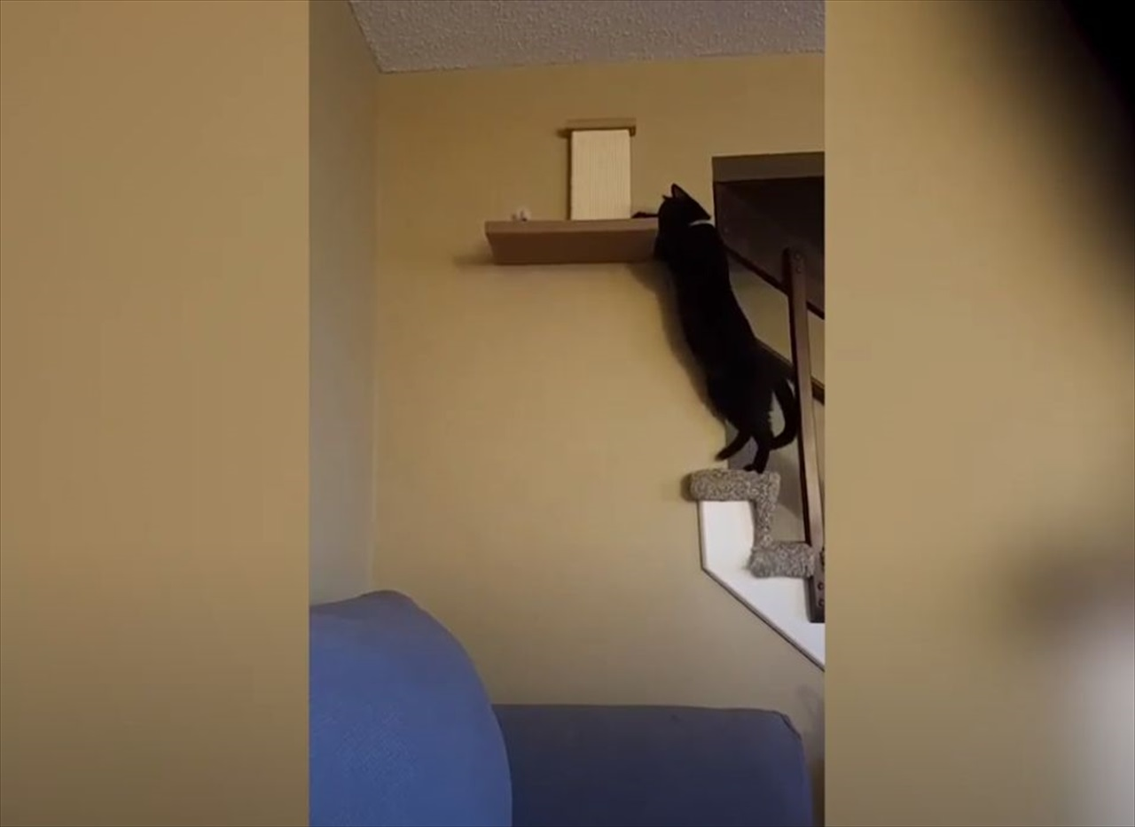 ニャンコが棚に華麗に飛び乗るのかと思いきや、目も当てられない衝撃的な結末に!