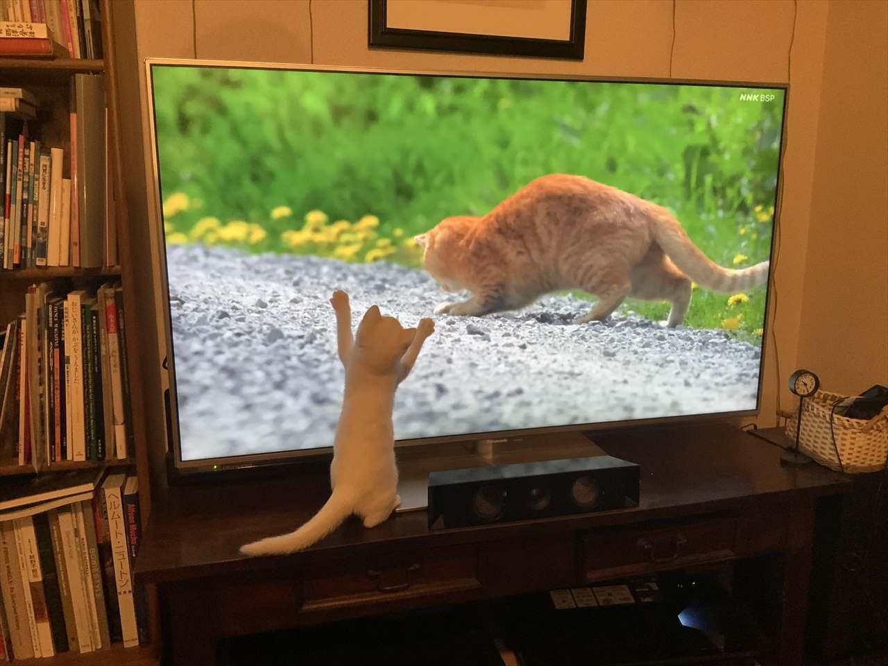 さすがは猫好きのレジェンドが登場する番組!人間だけでなく猫も魅了する「世界ネコ歩き」の凄さが分かる1枚