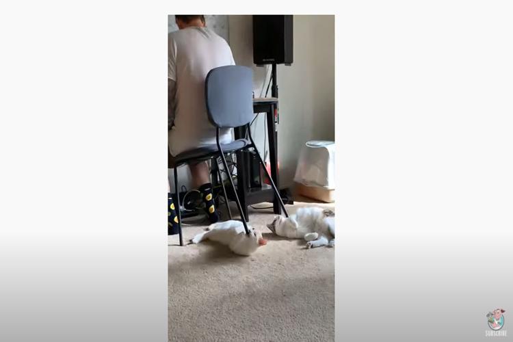 不可解行動がカワイイ!猫のせいで椅子の足を下せない飼い主が話題に