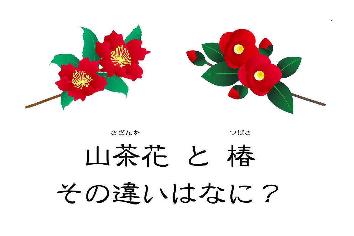 そっくりな花「山茶花」と「椿」、その違いは?それぞれの花言葉はなに?