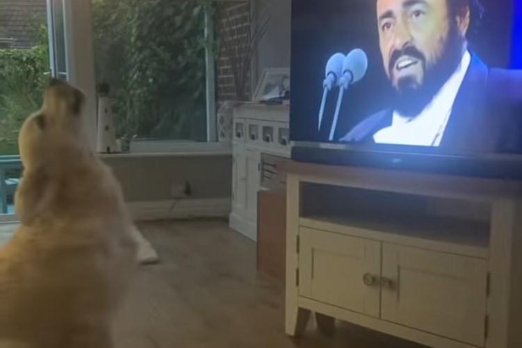 【動画】テレビの前でワォォォン♪オペラが大好きすぎて一緒に歌っちゃうワンコが可愛い!