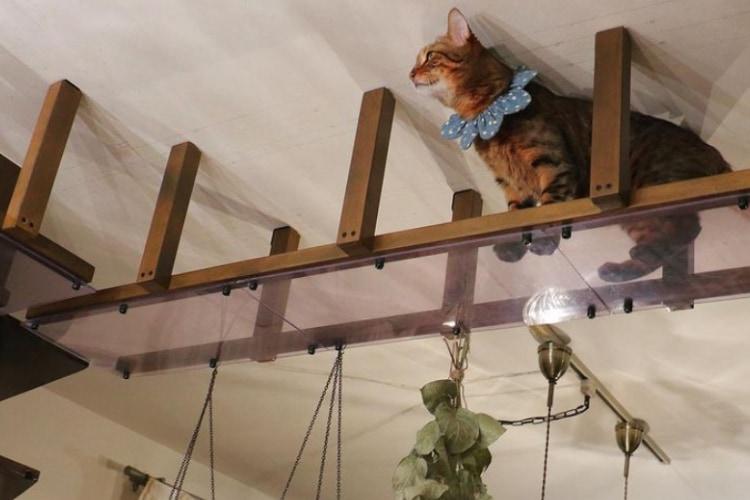 飼い主が愛猫たちのために行う自宅のDIYが凄すぎる!ニャンコ5きょうだいの面白可愛さも必見!