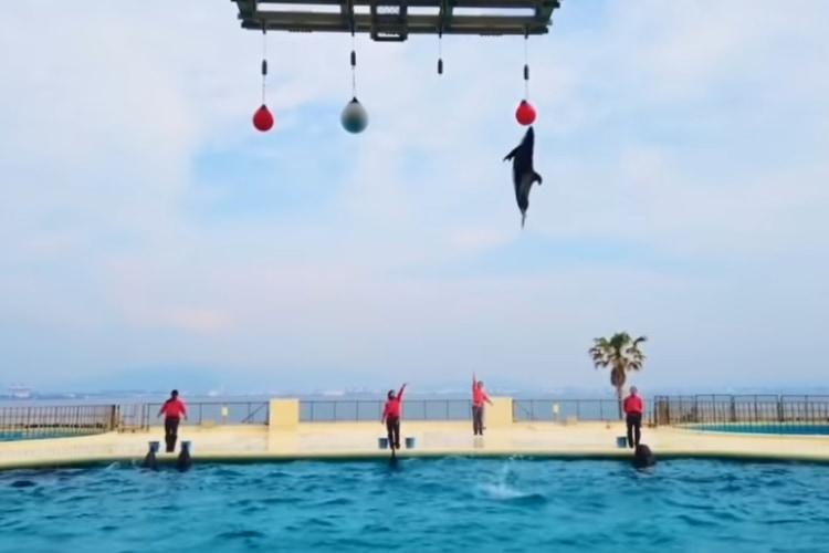外出自粛でも楽しめる!福岡の水族館「マリンワールド海の中道」のイルカショー動画をご覧あれ!