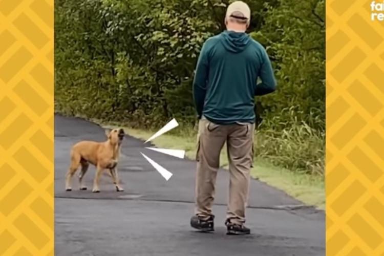 【動画】最初は近寄らせなかったのに・・・1年かけて野良犬を保護したカップルのストーリーが話題!