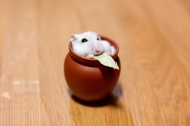 「はぁ〜たまんないや♪」壺の中で幸せを感じてるハムスターが可愛すぎると話題に!