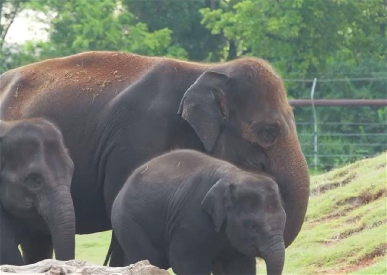 ゾウの赤ちゃんのエコー映像に感動!体のパーツが驚くほどはっきりと確認できる!