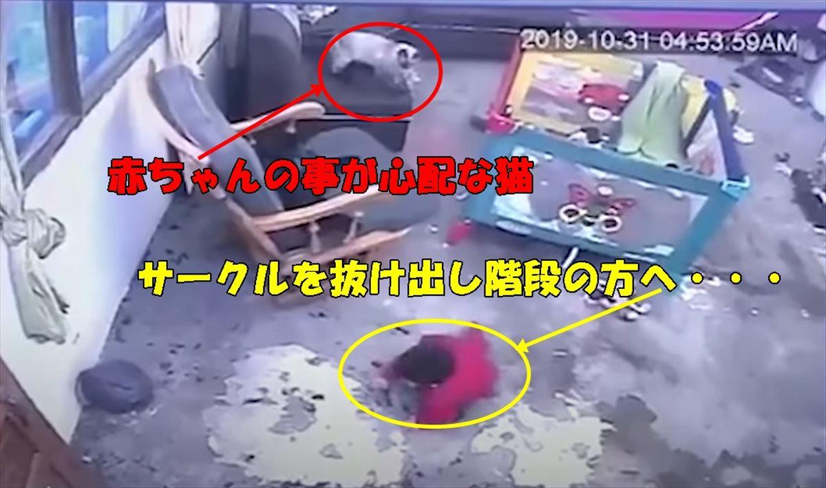 【猫のお手柄】赤ちゃんの階段からの転落危機を身を挺して止めたニャンコが凄すぎる!