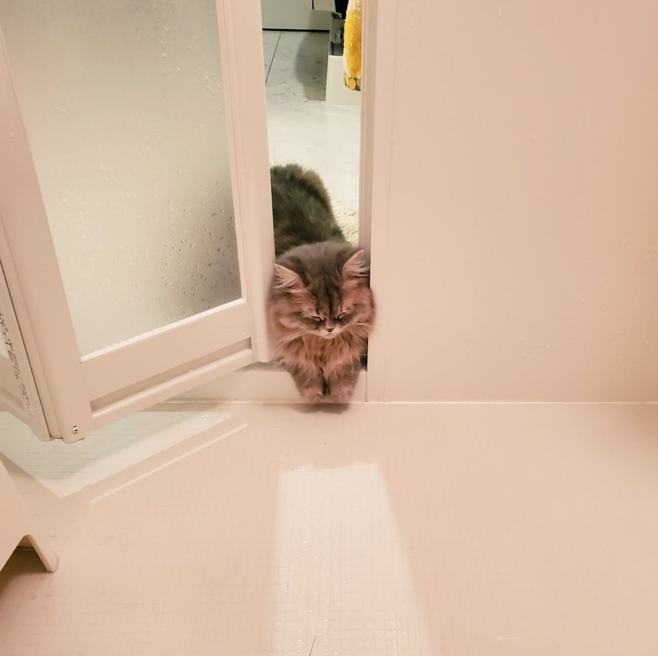 お風呂を覗きに来たのに挟まって寝ちゃった猫が可愛い!色んな場所に挟まる猫をご紹介