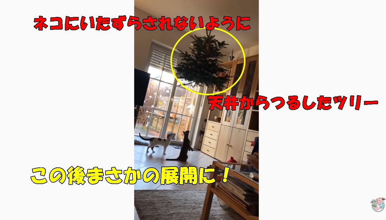 ウソでしょ!?猫対策でツリーを吊るしたのに...結果が衝撃的!
