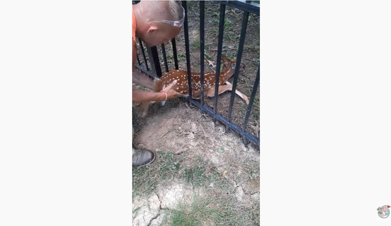 柵に挟まった子鹿を救え!子鹿の救出動画に賞賛多数