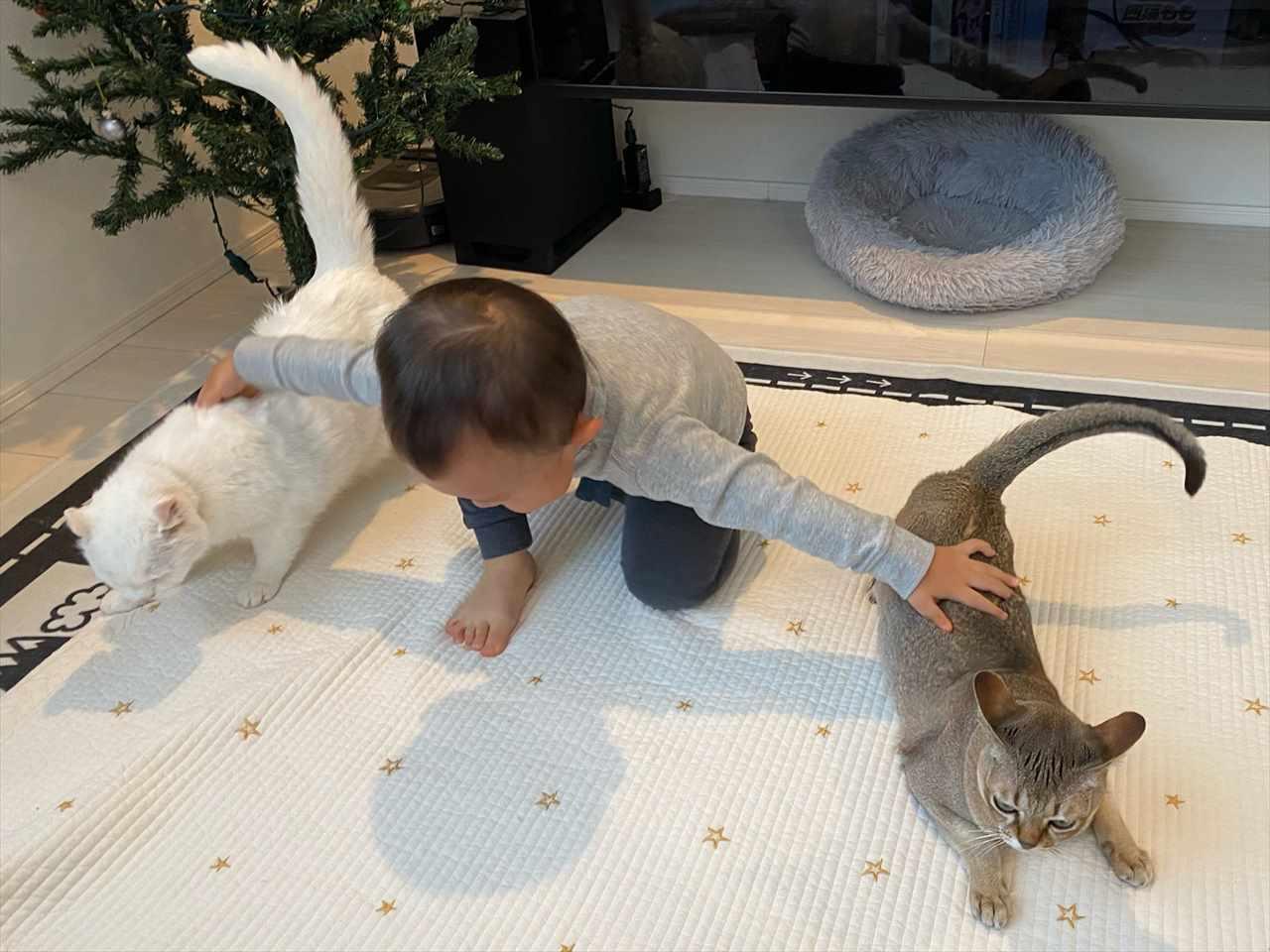 ん?何かを指示している!?(笑) ニャンコを使役する2歳児の頼もしい姿が話題に!