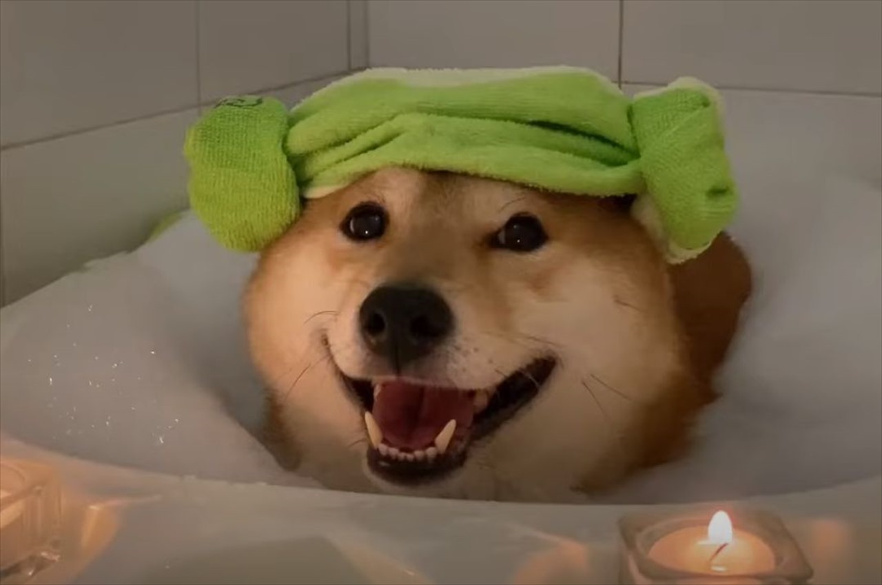 この笑顔はプライスレス!お風呂でリラックスする柴犬が可愛すぎてたまらない!
