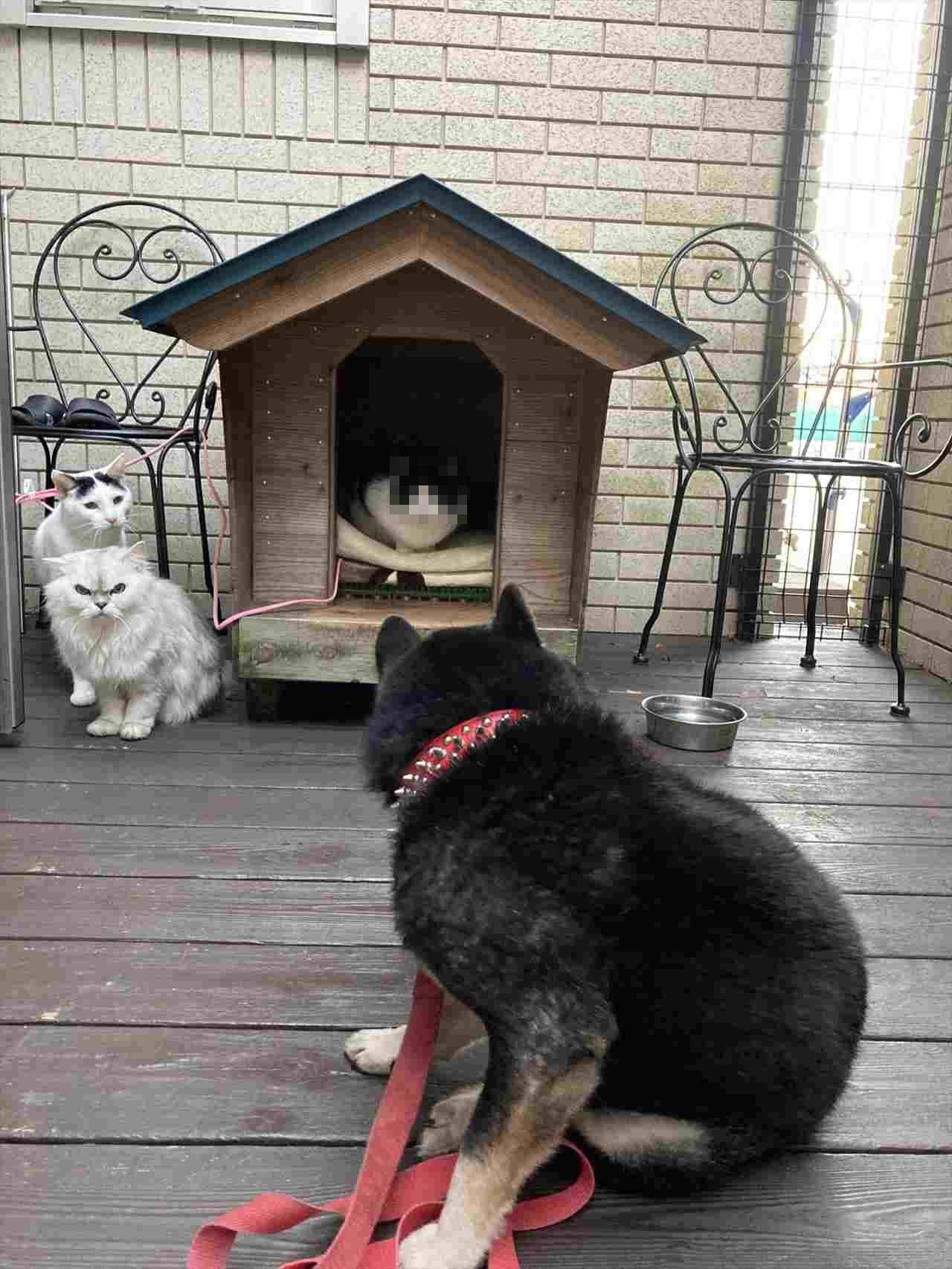 ニャンコたちの視線が怖すぎる・・・(笑) 犬小屋を乗っ取られることに慣れてしまったワンコが話題に!