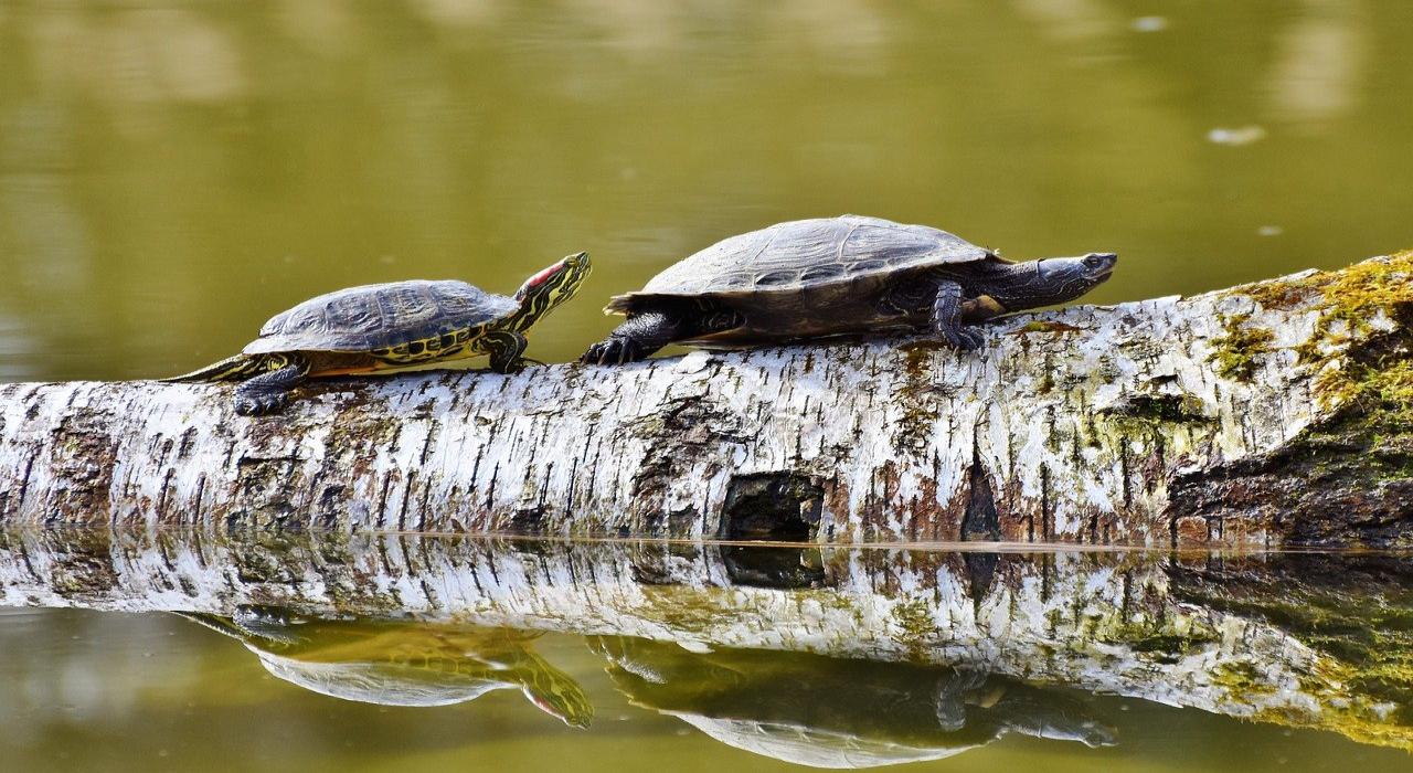 「盲亀の浮木」、それはめったに出会えないことの壮大すぎる例え