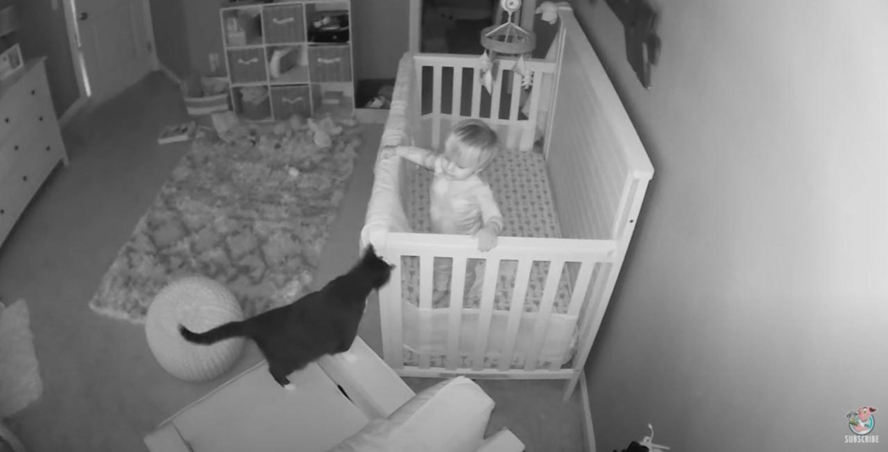 監視カメラは見た!おやすみの後の猫と赤ちゃんの秘密の会話に癒される