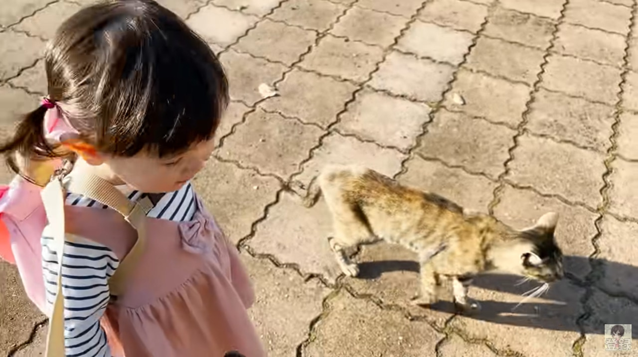 1歳児と猫の不思議な会話動画が尊い!猫と女の子の会話動画に癒される