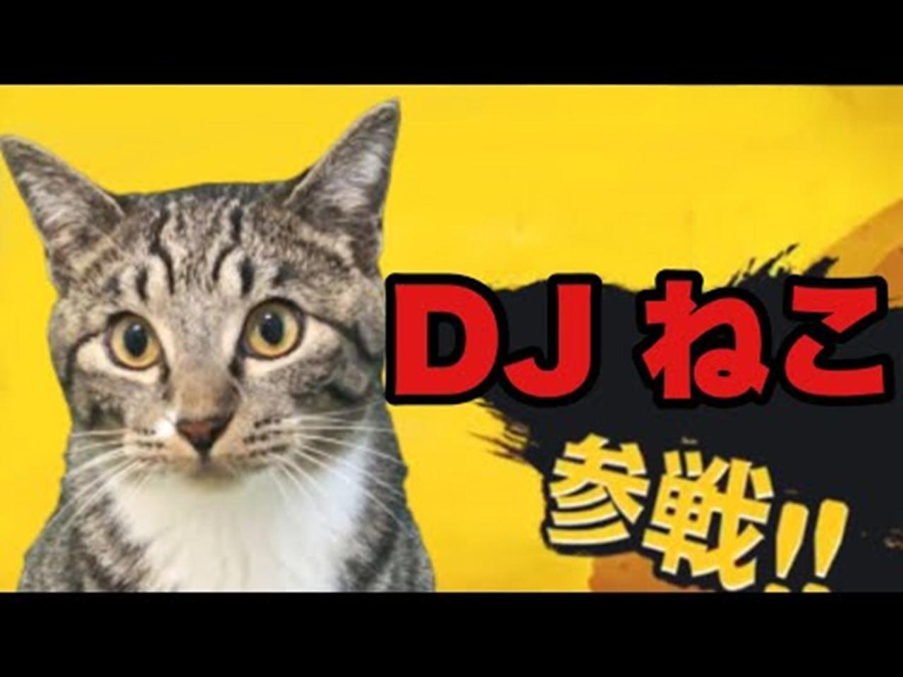 DJねこってどういうこと?見ればわかる!DJねこの可愛いスクラッチテクをご覧あれ!!