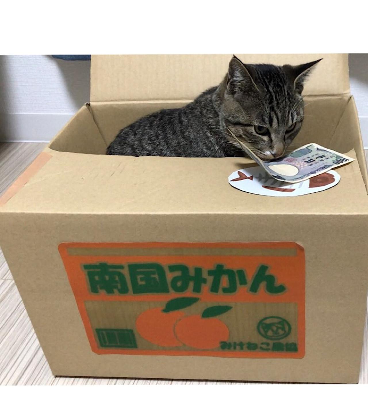 いたずらBANKのウチのリアル猫バージョン!?「貯める猫」が可愛すぎる!!