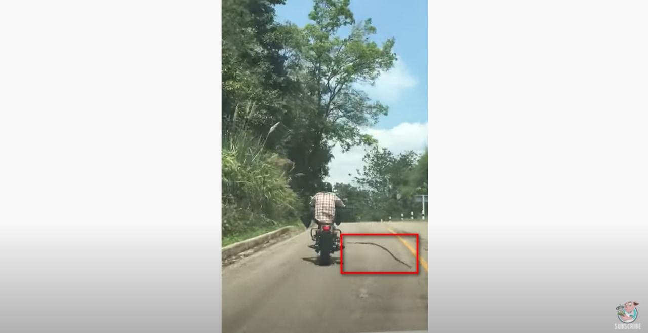 大蛇によるバイク襲撃!野生のヘビが走行中のバイクに襲い掛かる衝撃映像