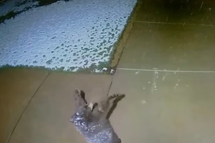人間だけじゃなかった!監視カメラが捉えた雪を掴もうとする子熊の姿が可愛すぎる