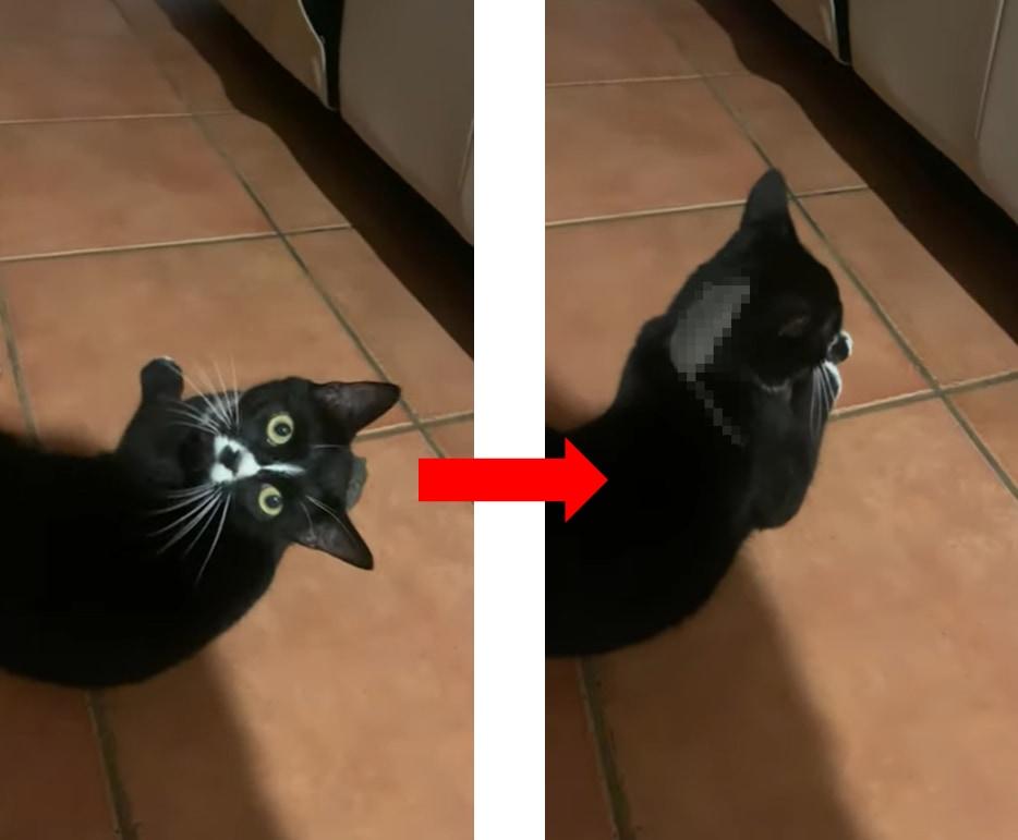 子猫がネズミを捕獲!しかし次の瞬間ネズミが消えてしまい...衝撃的な展開だけど癒される