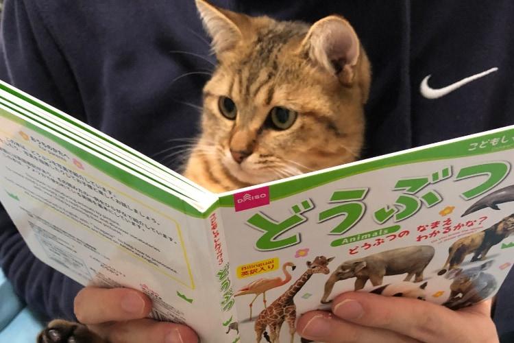 「ふむふむ、勉強になるニャ」真剣な顔でどうぶつの絵本を読むニャンコが可愛すぎる!